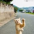 東京音頭(盆踊り)の練習をするネコに出会いました! @相島のネコたち