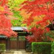 禅寺の紅葉 2