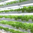 照射する光によってレタスの味が変わることを発見!植物工場の利点「安全・安定・栄養」を生かせ!