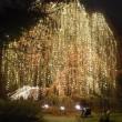 ドイツ(Germany 🇩🇪):  Christmas Gardens open