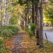 のっぽろ森林公園・晩秋へ