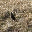 冬に 「生きる野鳥」