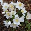 冬にも見られる花たち