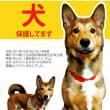 迷子犬のポスター