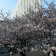 2018/3/31 横浜みなとみらいの桜