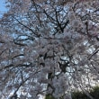 春・・だよねぇ~~!