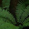 雨上がり・戸隠森林植物園