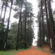 「氷点」の林にて
