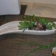 植物の成長に大切な根張が違うネオコールを使って秋のガーデニングしましょう