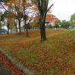 赤く染まった紅葉と落ち葉