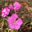 凛と立つ花