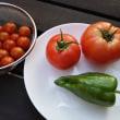 今年の野菜と屋上BBQ♪