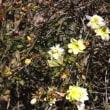 藤野園の春