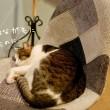 ネコのネコによるネコのための権利