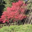 金沢の秋2017-7 兼六園 ② 霞が池エリア
