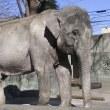 井の頭動物公園,ハナ子,日本で一番の年よりだゾー