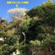 海南神社 ~神奈川県~ #2