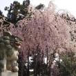 #春休み #かみね公園 #茨城県