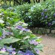 夏の斑入り植物と山野草展