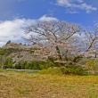 4月11日  石割桜満開