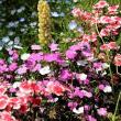 法華寺に咲く花々