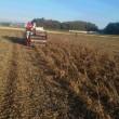 大豆の刈り取り