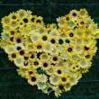 秋のくりはま花の国(2)