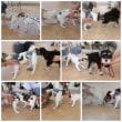 9月9日は子犬のための【パピーパーティー】  犬のしつけ教室@アロハドギー