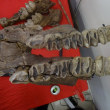 池袋2017化石ショーに行ってきました その2 長鼻類化石