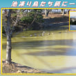 この冬最低気温 「池凍り鳥たち餌に一苦労」