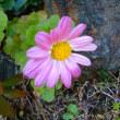 12月9日の花