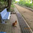 今朝の集い!ハンサムさんはお嬢さん?青いベンチの温もりは猫も人も惹きつけている!