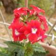 花手毬とルピナスの花