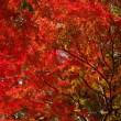 皇居の紅葉