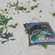 台風五号に挑戦する植栽