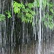 梅雨空の合間に