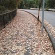 歩道に枯葉が一杯