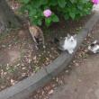 猫百景(松戸の猫たちと紫陽花)