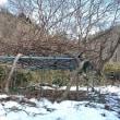 真冬に「キウイフルーツ」の剪定