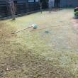 何事もコツコツと!芝刈りスタート、そして、タルト作り♡