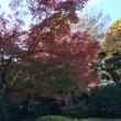 晩秋のお散歩