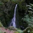 花巻薄衣の滝(6/18、滝)