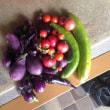 家庭菜園・園芸2017(4) キウリ、トマト、ナスは本日の収穫をもって終了