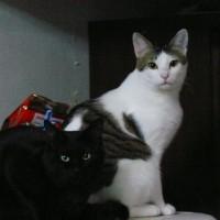 maru & kuro