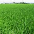 朝倉田んぼで運よく稲の花を見たお盆の二日目です。