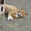 公園猫ちゃん 2017 0716、0717