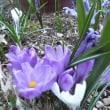 庭の花と野の花