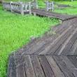 木道は雨上がりが綺麗だ