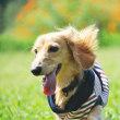 犬服モデル写真