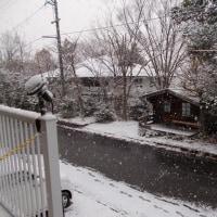 先日の雪降り